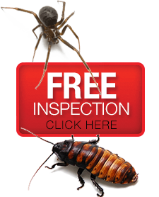 shop local, local owned, pest control, pest inspections, real estate pest inspections, extermination, exterminations, exterminators, exterminator, kalamazoo, battle creek, portage, galesburg, michigan, local owned, local operated, exact pest control, premier pest control
